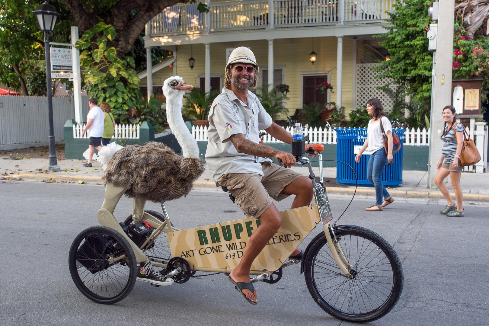 Art gone wild! Key West USA