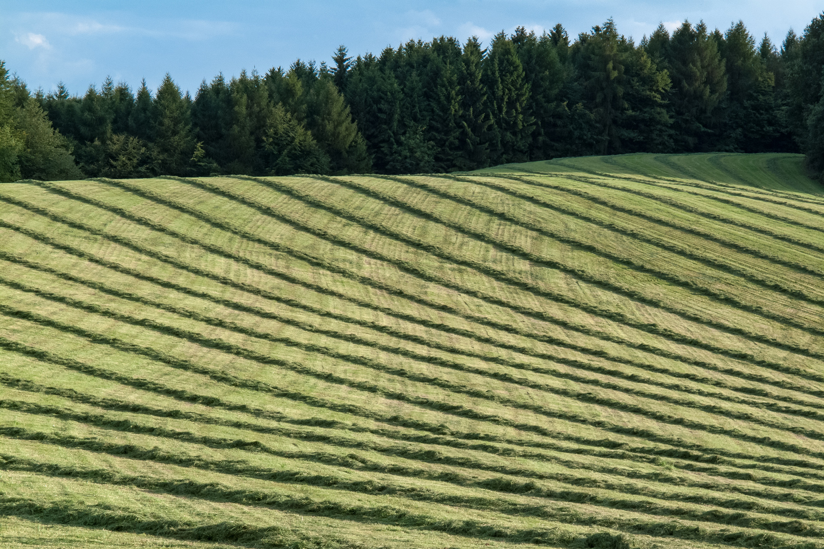 Frisch gemähte Waldwiese Bergisches Land GER
