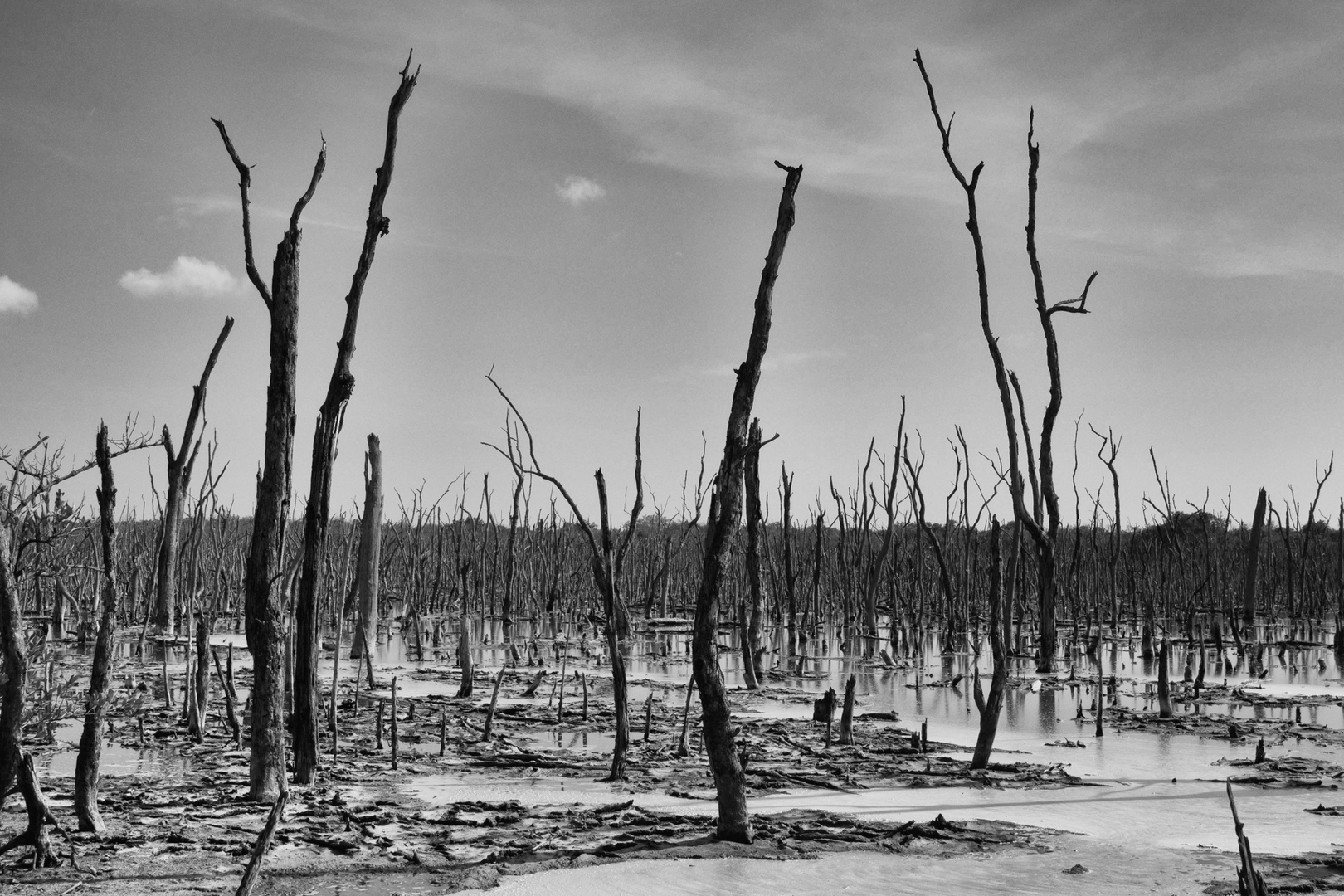 Sumpfgebiet San Marco Rd. Florida USA