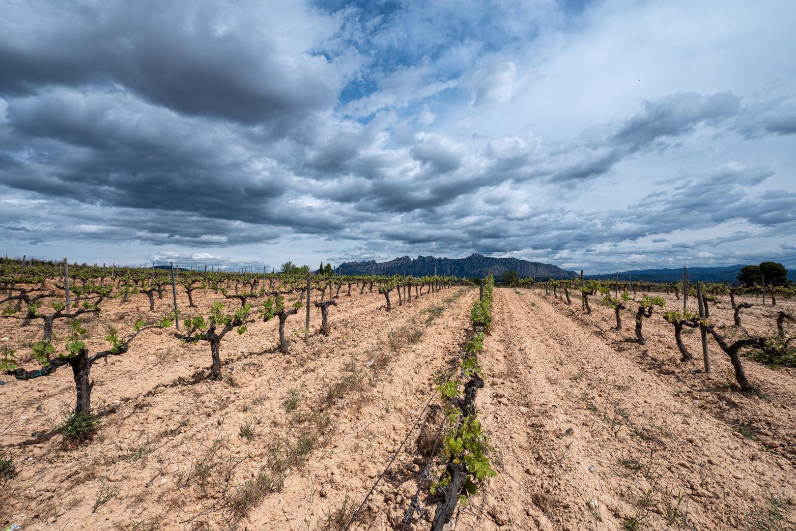 Weinparzelle in der Penedés Region ESP