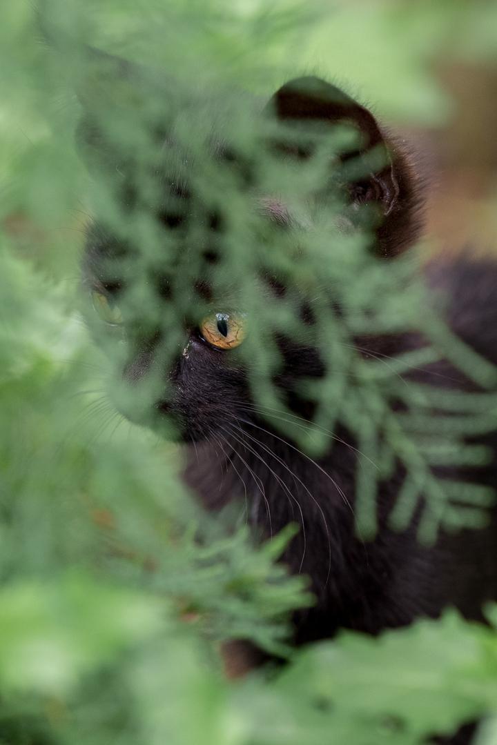Junges Kitten versteckt sich Bauernhof Camargue FRA