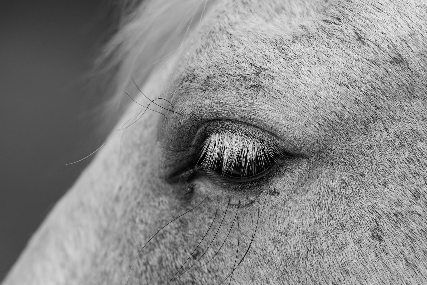 Pferdewimpern